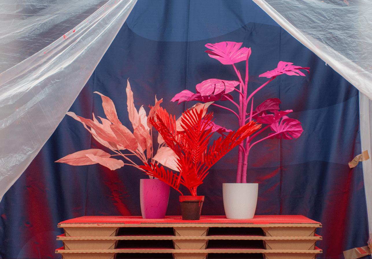 Bunte Pflanzen Hugendubel